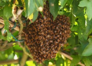 Bees & Hornets Pest control