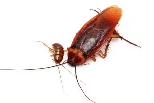 Cockroach Pest Control 2