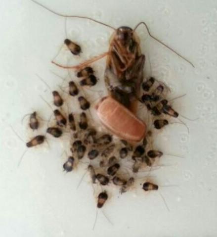 Cockroach Pest Control 3