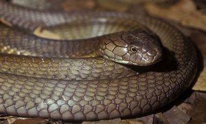 Snake Pest Control